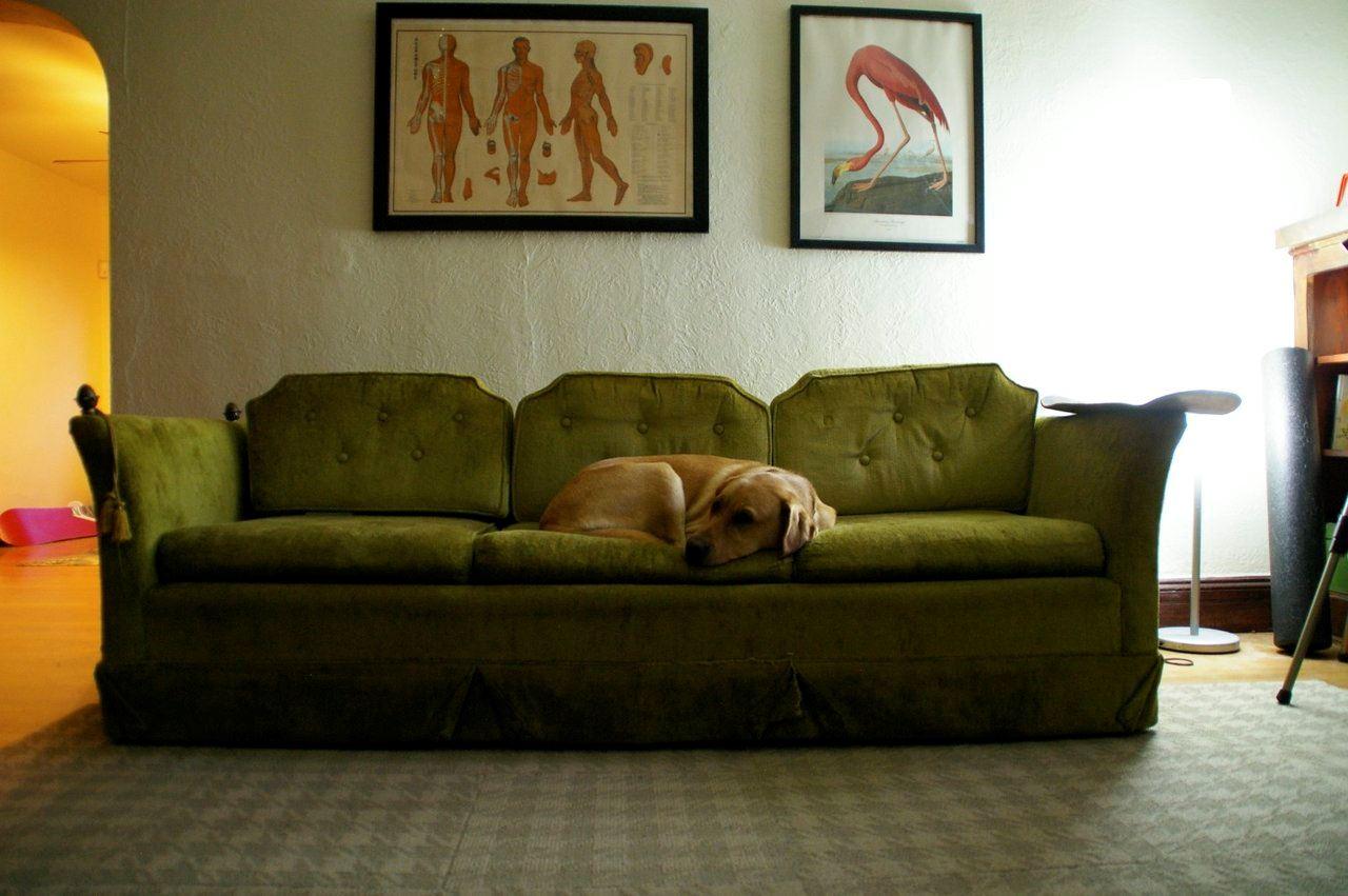 Зеленый диван (43)